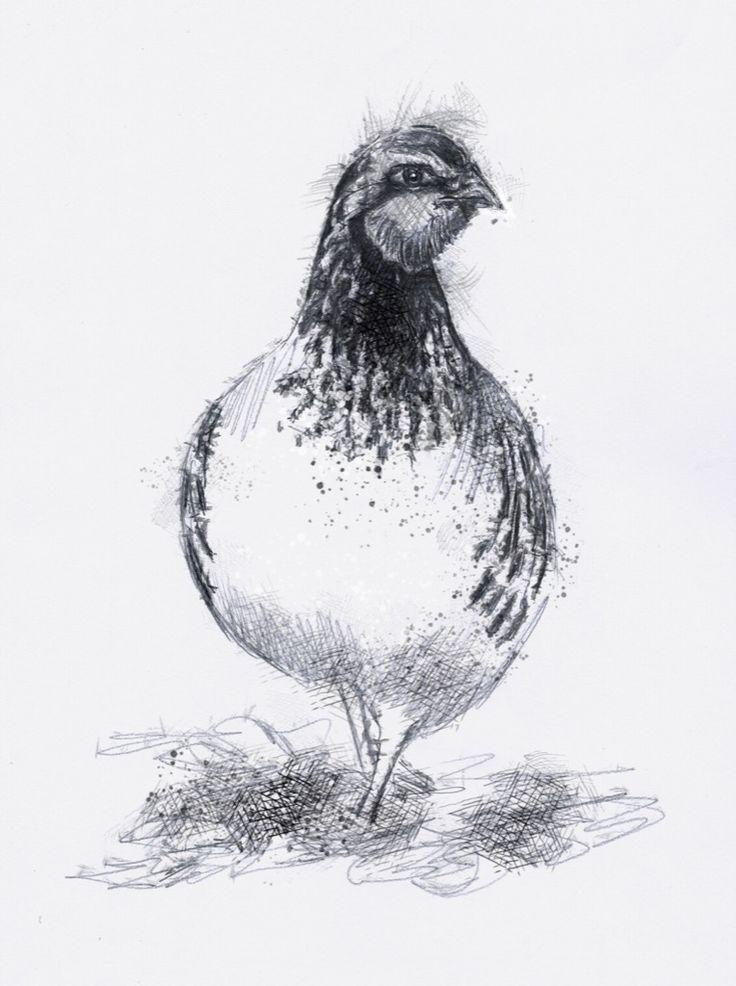 Artist Sean Briggs producing a sketch a day Partridge #art #drawing #http://etsy.me/1rARc0J #partridge #sketch