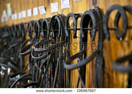 Equine Photos et images de stock | Shutterstock