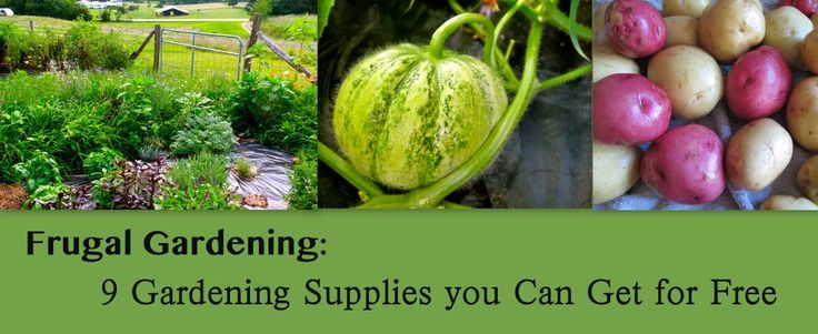 Gardening certainly can be an expensive endeavor, but it doesn't have to be. If you want to grow your own food without spending an arm and leg on supplies there are many gardening supplies you can get very cheaply or even for free.