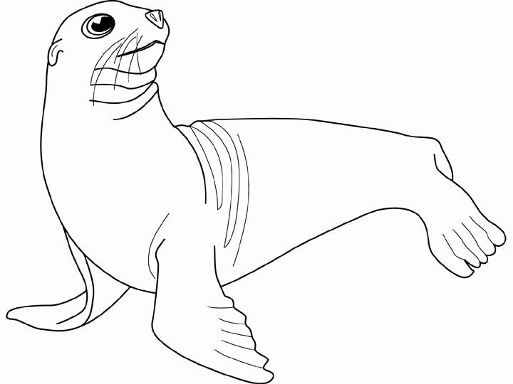 24 Sea Lion Coloring Page In 2020 Lion Coloring Pages Bear