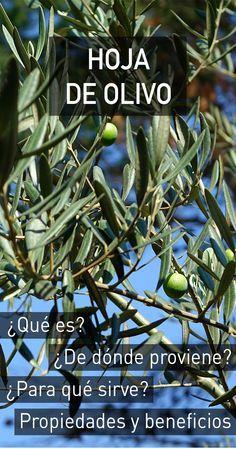 Hoja de olivo : propiedades, beneficios para la salud, efectos secundarios y dosis recomendada
