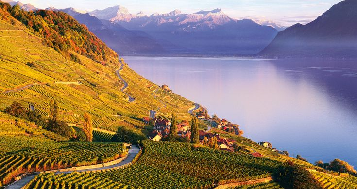 Lavaux Vineyard Terraces, VD | An amazing view at only 55 minutes from Whitepod resort !