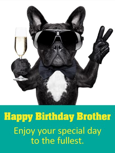 Party Dog Happy Birthday Card for Brother: Is your brother a cool dude? Does he deserve a birthday card that shows how awesome and cool he is? If so, then you've found the right one! This Happy Birthday card has a picture of a dog who is just as cool as your brother. His sunglasses, bowtie, gloves, and champagne will make your brother laugh and give him sweet birthday wishes on his special day!