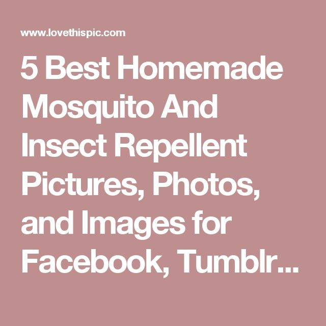 5 Best Homemade Mosquito And Insect Repellent Pictures, Photos, And Images  For Facebook,