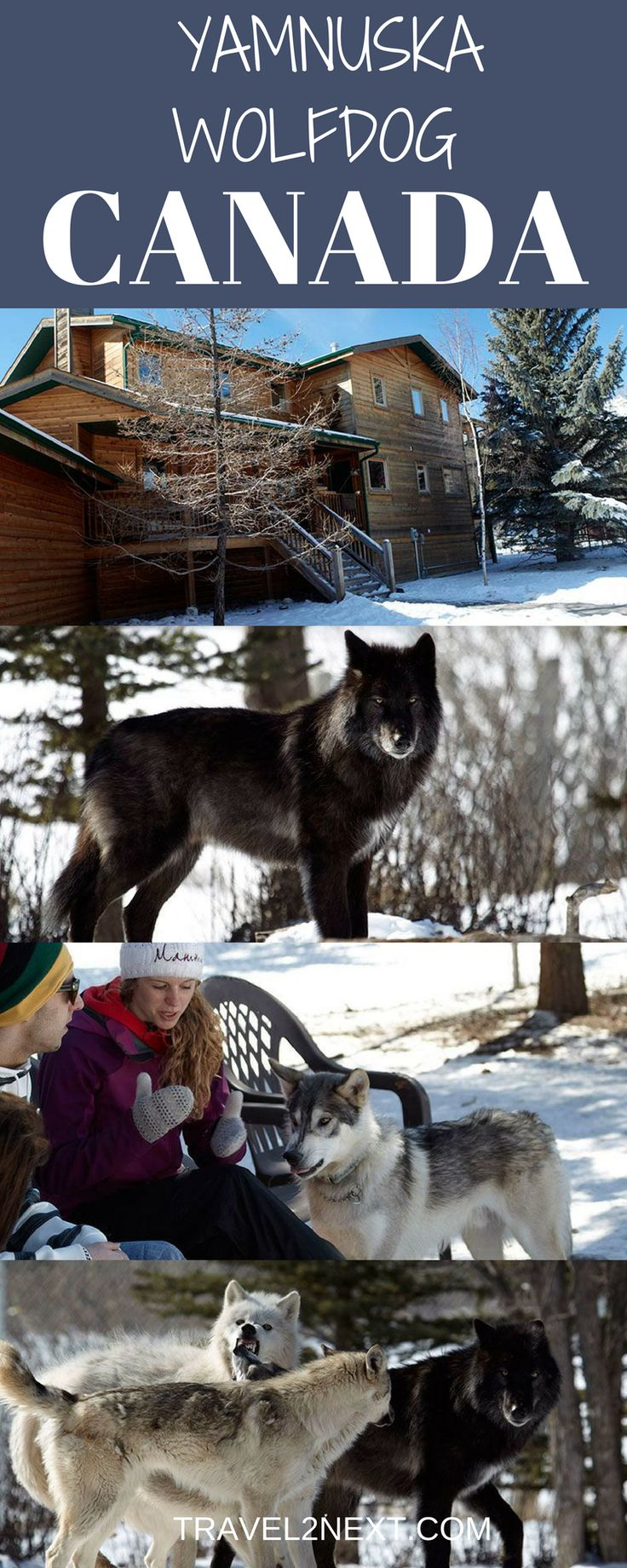Yamnuska Wolfdog Rescue Video |Ski Canada. One of my more memorable experiences in Canada was a visit to the Yamnuska Wolfdog Rescue in Canmore, Alberta.