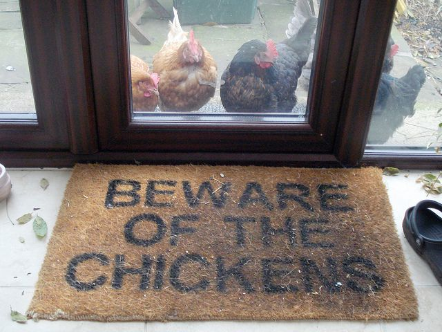 Beware of the Chickens..I have three stalker chicks that go from door to window trying to entice me out to pet and hold them.  they chase the gardener,dogs squirrels,cats or any other intruders. I call them my attack hens.