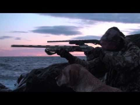 ▶ chasse canard eider - YouTube