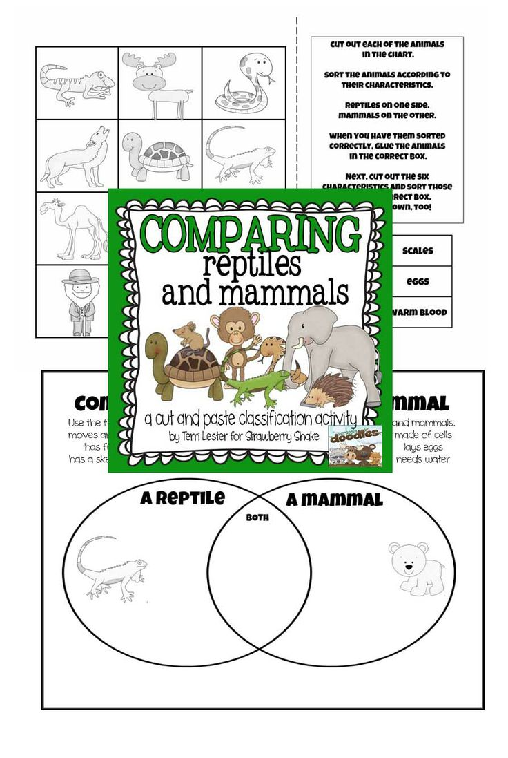 coloring pages animal classification lesson - photo#30