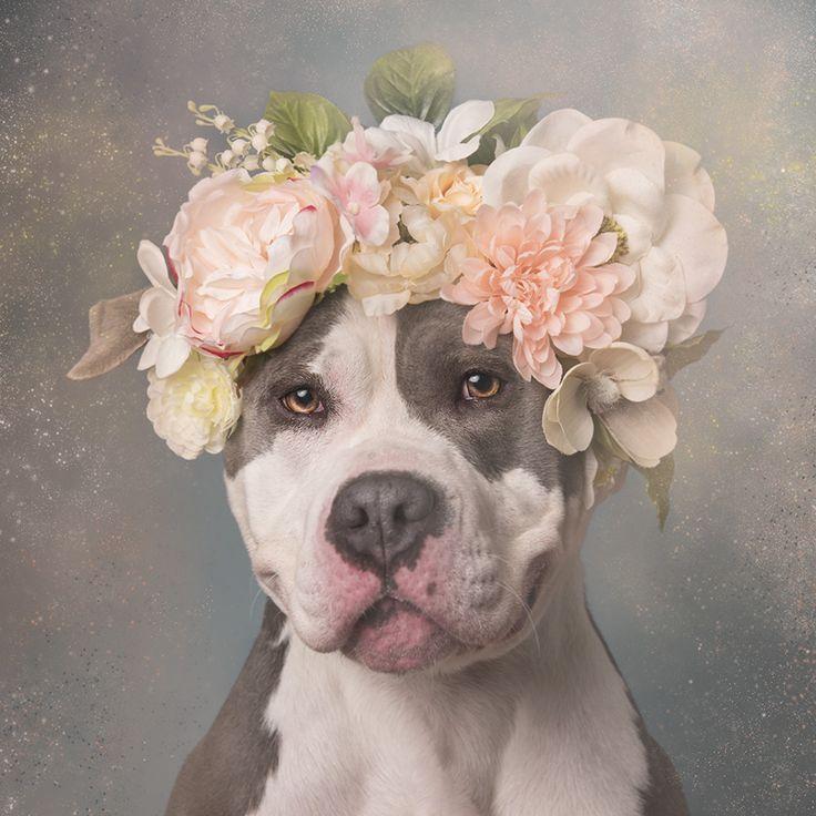 The softer side of pitbulls - Album on Imgur