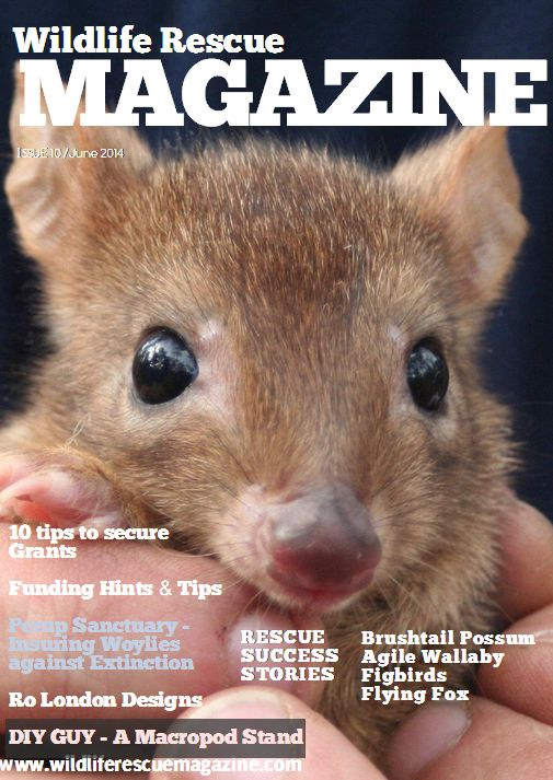 Issue 10 more than likely my favorite with #flying_foxes, #wallaby, #brushtail_possum www.wildliferescuemagazine.com/issue-ten.html