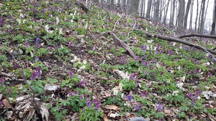 Tavaszi Börzsöny