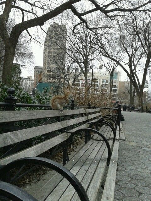 Eating lunch with a squirrel in New York.