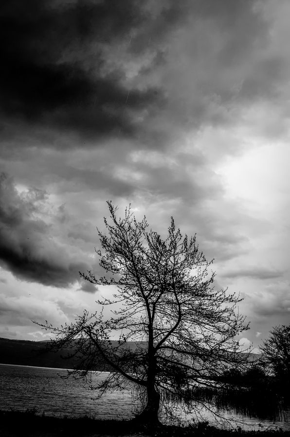 A lonely tree gazing at the lake by Odysseas Megalooikonomou - Photo 144572711 - 500px
