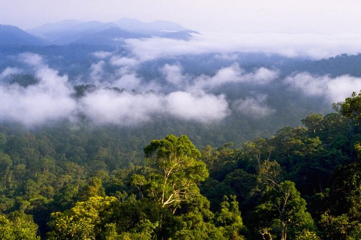 fotos med tropiske regnskove