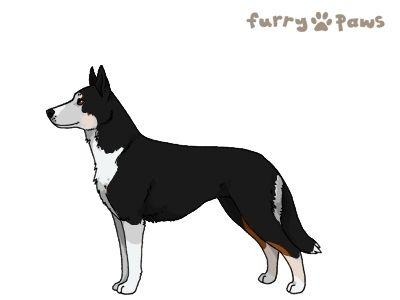 Furry Paws // WCH Kip's Tullebukk [3STM 23HH 1.513] 11.2 *BoB*'s Kennel