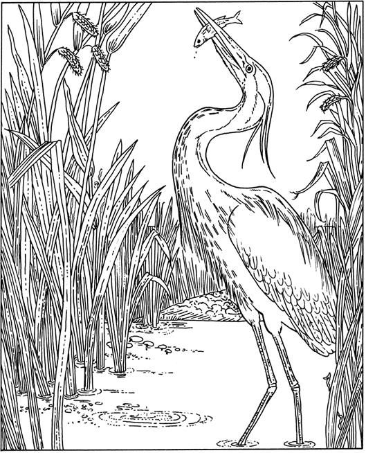From Mine Bird Coloring Pages Coloring Pages Adult Coloring