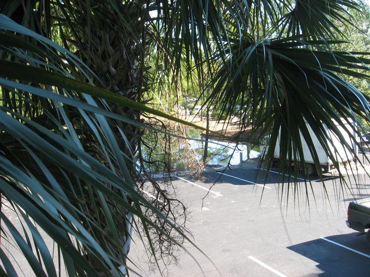 Palm Trees In Bluffton Savannah Bluffton Hilton Head