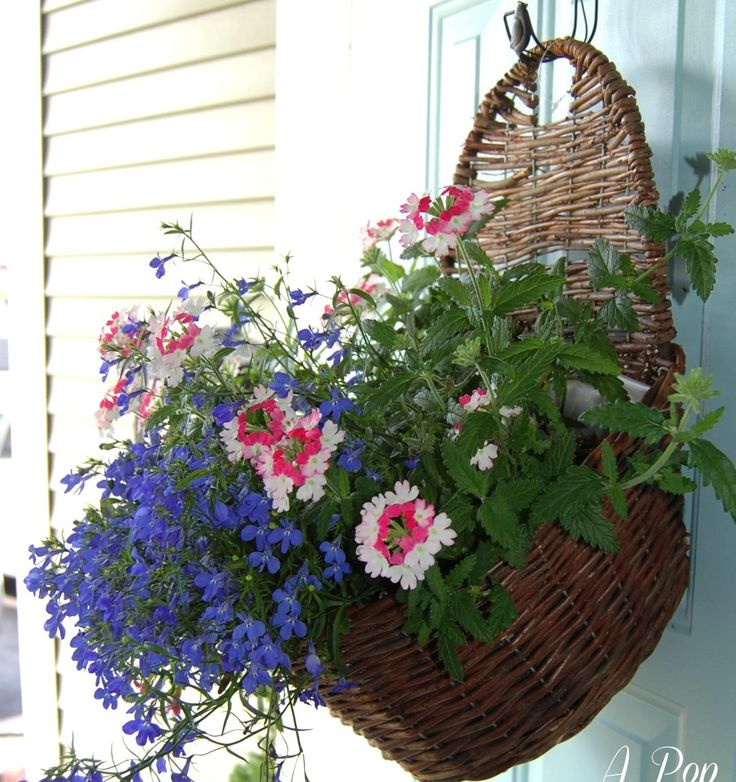 1000 images about summer decorating ideas on pinterest - Summer hanging basket ideas ...