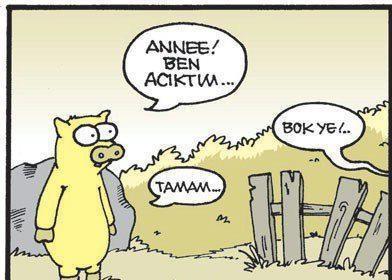 #domuz #bok