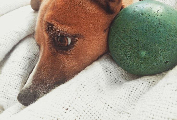 Really excited to spoil my Babies with some @Hillspetfoodsa goodies!! This morning all she wanted to do was play ball, my heart melts when I get pictures like this of her 💗💕💓