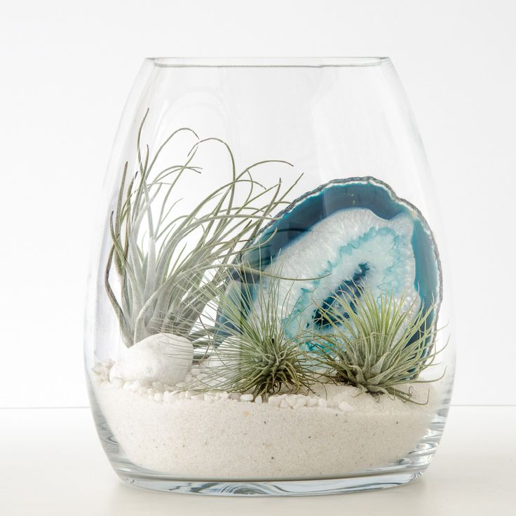 Your terrarium escape to the dazzling white sands and indigo waters of the Aegean Sea, featuring a stunning slice of blue lace agate crystal. This terrarium contains: Glass belly vase (17.7cmD x 20cmH) Tillandsia (3 airplants) Blue agate crystal White quartz sand White quartz stones White decorative pebbles Assembly and care instruction card Spray bottle…