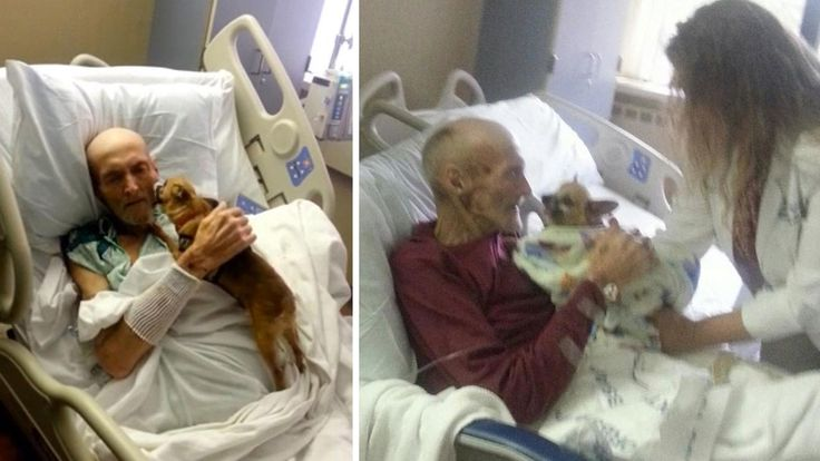 Terminally ill man James Wathen wasn't doing well until he got a friendly visit from his beloved pet.