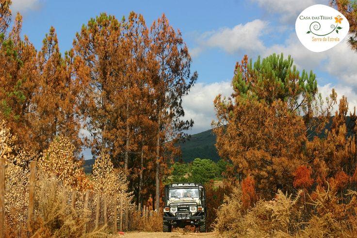 Floresta após o fogo de ago/05 São Romão #Seia #serradaestrela