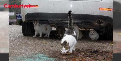 Araç sahipleri dikkat! Kaportaya vurmadan çalıştırmayın : Hayvan Hakları Federasyonu (HAYTAP) Osmaniye İl Temsilcisi Veteriner Hekim Ali Laçinbala havaların soğuk geçtiği şu günlerde özellikle kedilerin sıcaklığı sebebiyle araçların motorlarına girip uyuduklarını belirterek sürücülerin kaportaya vurmadan önce araçlarını çalıştırmamasını istedi.  http://www.haberdex.com/turkiye/Arac-sahipleri-dikkat-Kaportaya-vurmadan-calistirmayin/137765?kaynak=feed #Türkiye   #vurma #araçların #motorlarına…
