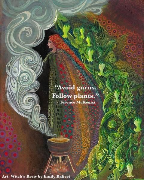 """""""Avoid Gurus. Follow plants."""" ~ Terence McKenna / Aligned Spirit Healing / Datura / Psychedelics / Plant medicine / Hedge Witch / Green Witch / Shamanism / quote / Art: Witch's Brew by Emily Balivet / Insight <3"""
