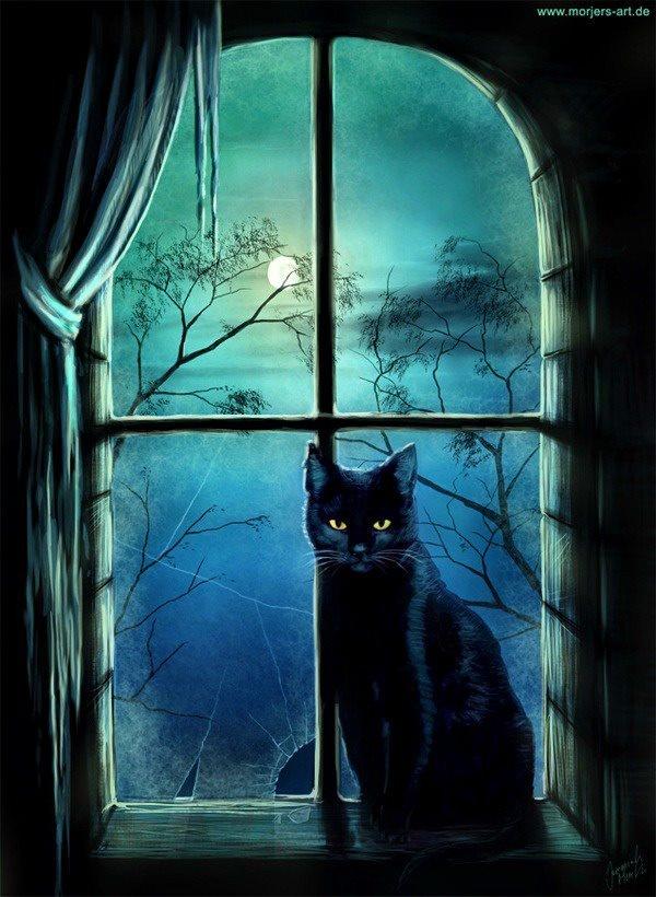 Los gatos y la noche.