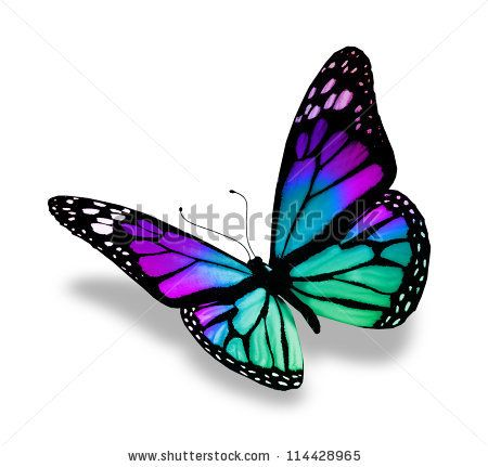 Butterfly, isolated on white background by suns07butterfly, via Shutterstock