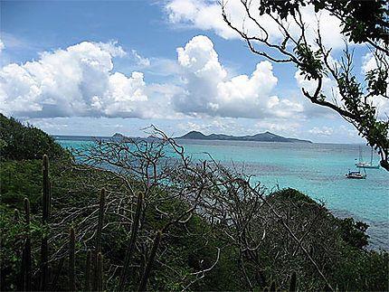 Idéal plongée//Saint-Vincent-et-les-Grenadines > Tobago Cays
