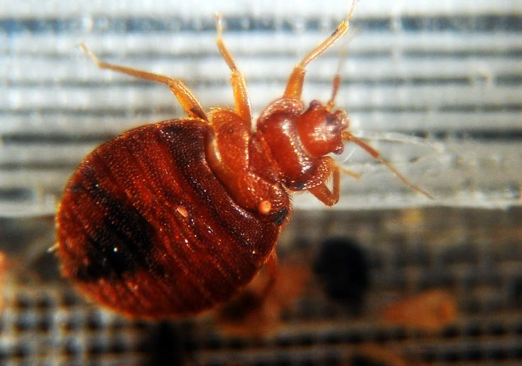 How bad is it? A new study found that 1 in 8 low-income apartments in New Jersey had an infestation.