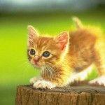 Czym nie mogą być karmione koty