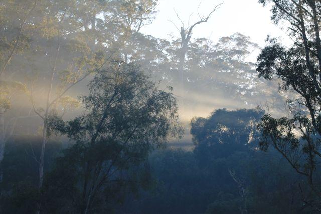 Sunrays at Channybearup, Western Australia...Taken by Daphne Greenhow