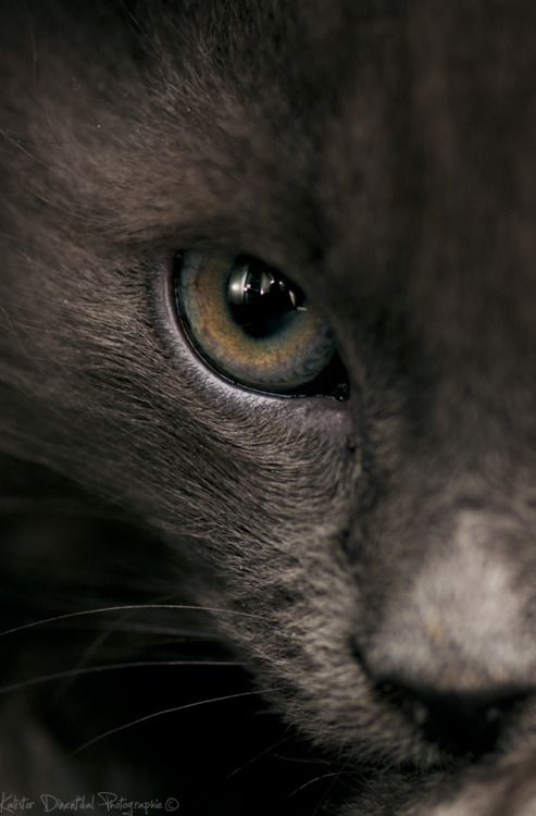 """""""I wish I could write as mysterious as a cat."""" --Edgar Allen Poe"""