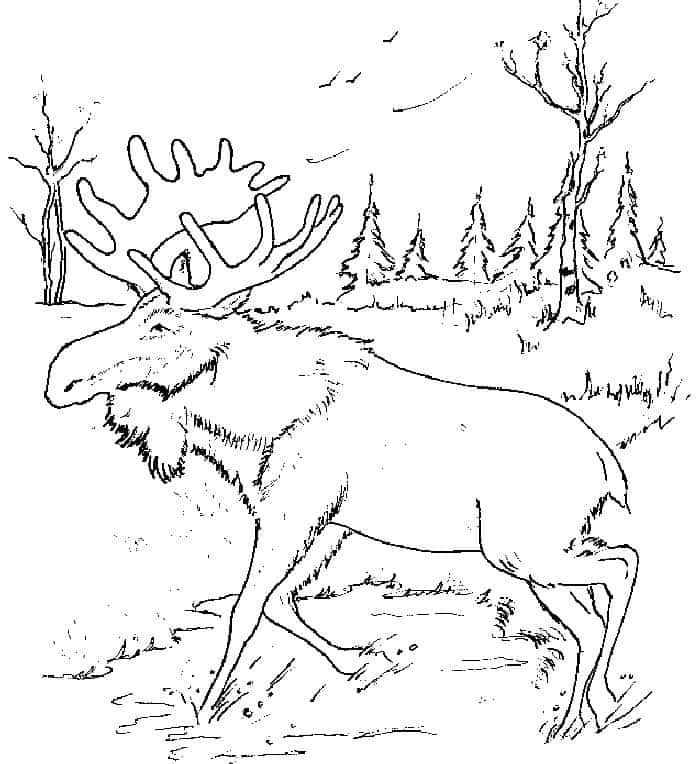 Moose Coloring Pages For Kids Pdf Printable Free Coloring Sheets Animal Coloring Pages Coloring Pages Winter Snowman Coloring Pages