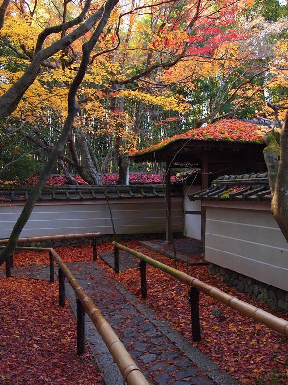 大徳寺塔頭 高桐院の紅葉 DAITOKUJI TEMPLE, Kyoto