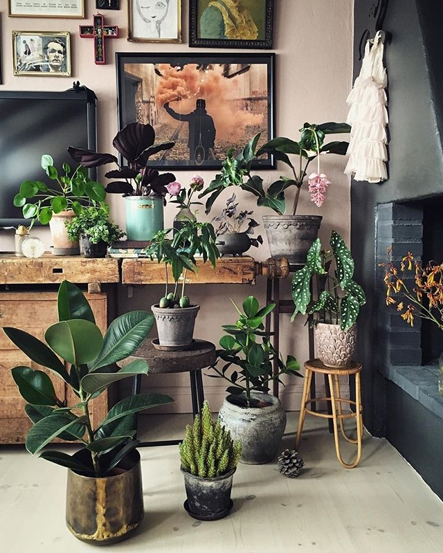 Wow Isabelle, we your eclectic #plantgang including the #Medinilla (Plant of the Month May!). You can read more about her plants on her blog (in Swedish or use Google Translate ) :@isabellemcallister #urbanjunglebloggers #hpotm