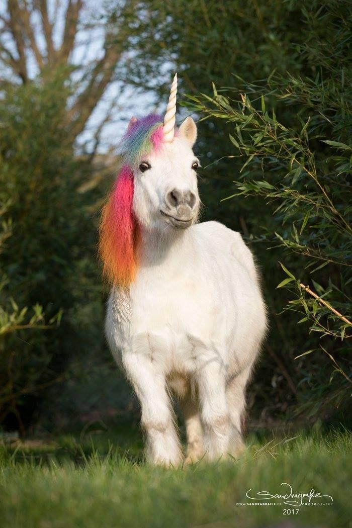 Ein Pferd Mit Bunter Mene Und Horn Und Naturlich Glotz Augen