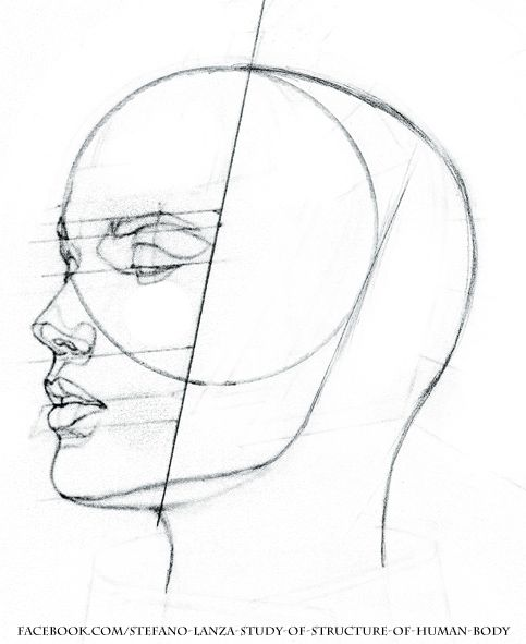 how to draw the structure of a face