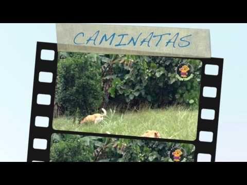 UN DÍA EN EL COLEGIO DOGS RESORT