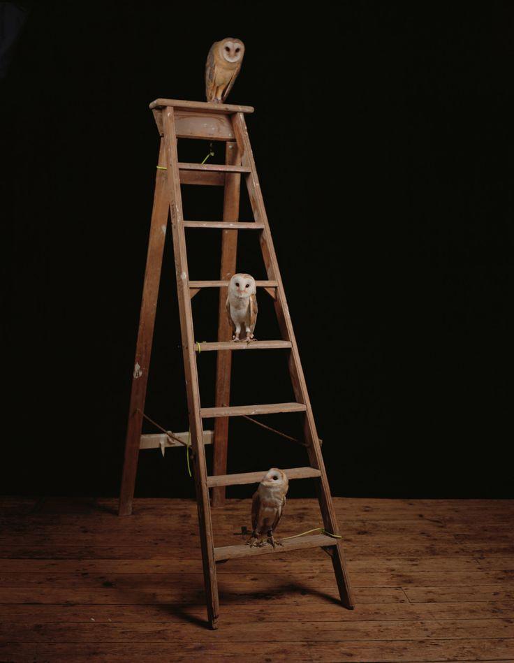 "contemporary-art-blog:  "" Sam Taylor Johnson, Studio Owls, 2011  """