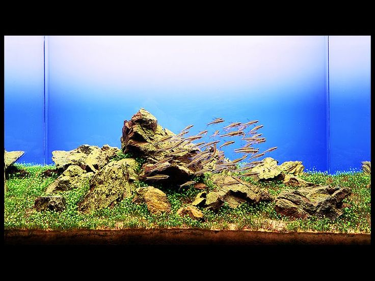 9 best Aquariums images on Pinterest | Fish tanks, Aquascaping and ...
