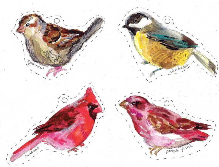 Winter birds free printables