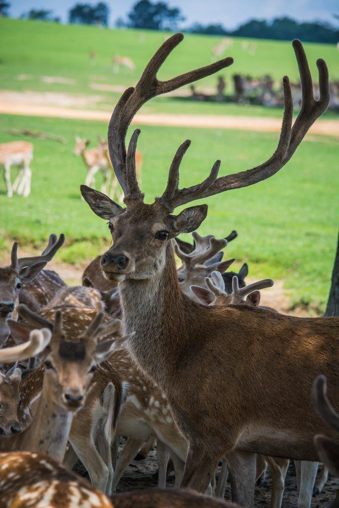 Louisiana Deer Map%0A Global Wildlife Center LA