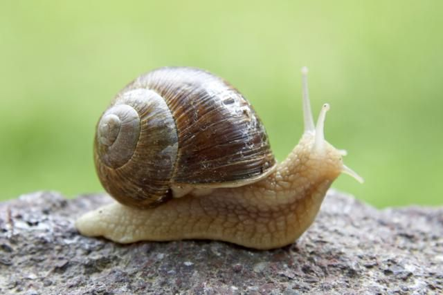 The 6 Basic Invertebrate Groups: Molluscs