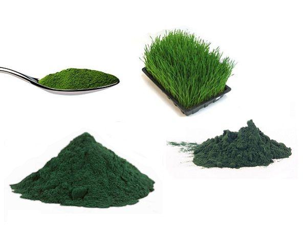 4 superfood verdi in polvere per ritrovare il benessere