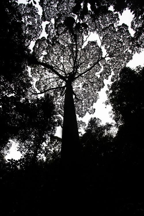 """The Jungle Cathedral"" Photo by Emanuele Del Bufalo -- National Geographic Your Shot"