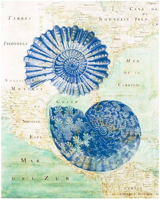 SEA PRINTS BY ALGANET - sea shells